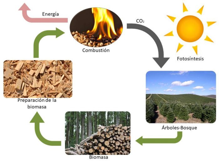 Ciclo biomasa
